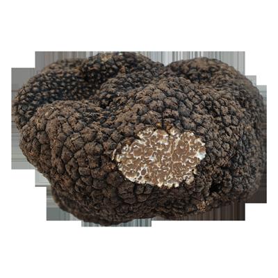 Trufa de Otoño (Tuber Uncinatum)